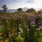 summer-wildflowers-great-smoky-mountains-tennessee