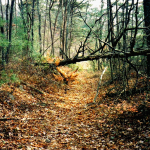 Unicoi-Turnpike-Trail_