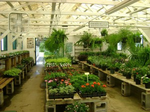 Moss Creek Nursery